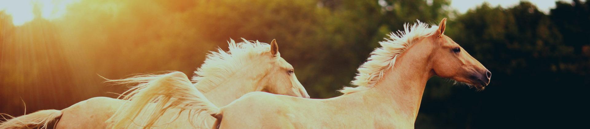 Állatgyógyászati termékeket, táplálékkiegészítőket, ápolószereket forgalmazunk állatorvosok számára.